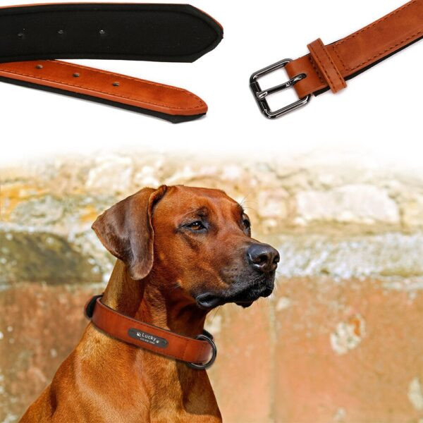 8 Colors Personalized Dog Collar Leather Pet Products for Dogs Accessories Pitbull Pet Collar Perro Puppy Collar Dog Petshop Pug